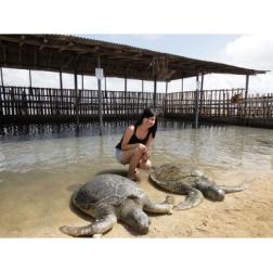 Mesmerizing Bali Tours With Nusa Penida Tours